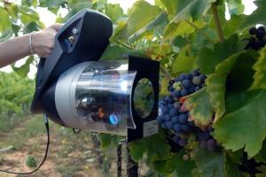 Forece-A Mesure de maturité de la vigne